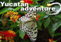Yucatan Adventure invites you to volunteer in our Sustainable Eco-Cultural Programs