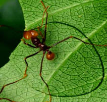 Read more about these amazing ants!